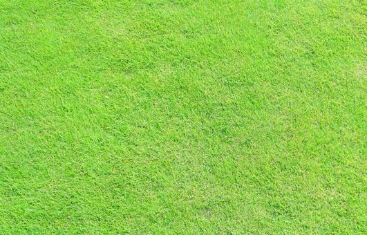 Texture · Short trimmed lawn