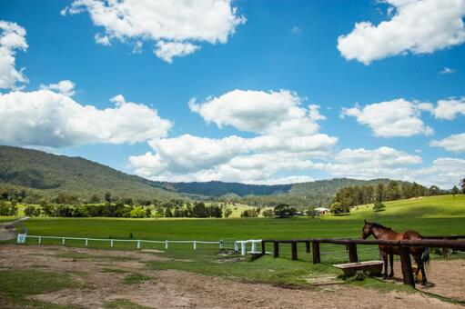 Ranch grazing field large nature horses vast large wide sky clouds earth living nature country living