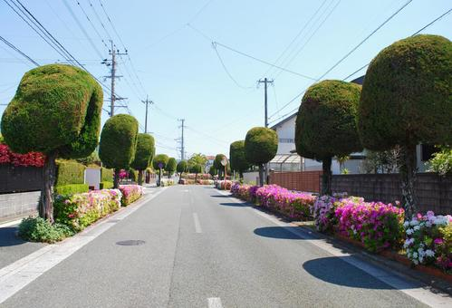 Roadside trees in the residential area of Showa