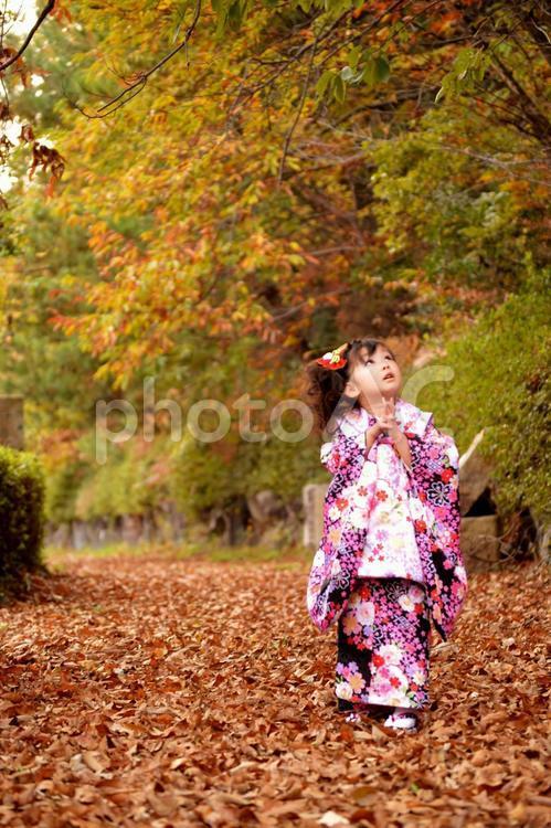 七五三の女の子 3歳の写真