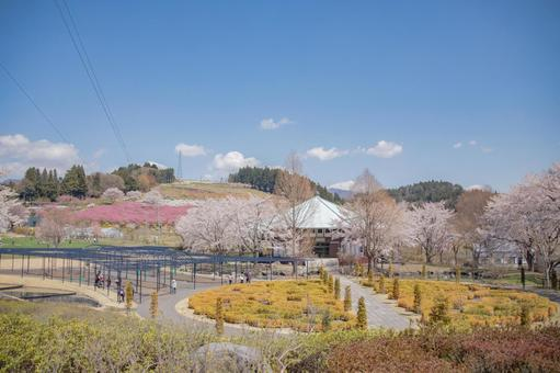 Blue sky and spring scenery