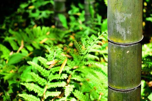 대나무와 양치류