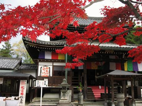 kyoto Autumn leaves in Kyoto Imakumano Kannonji