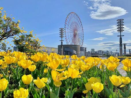 Tulip 8 yellow and ferris wheel