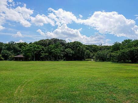 잔디와 푸른 하늘 이미지