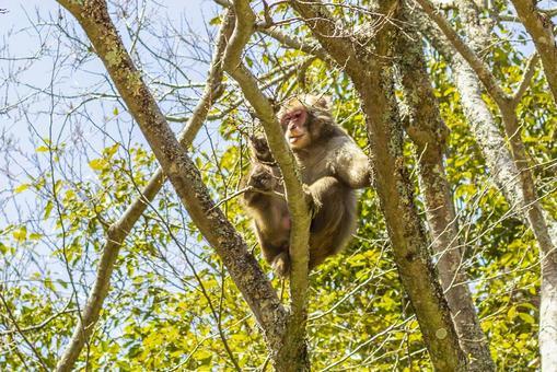 日本猴子在山上6