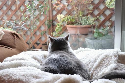 고양이 고양이 고양이 고양이의 뒷모습 배경 고양이 등 고양이가있는 생활 베란다를 보면서 휴식하는 고양이의 뒷모습 고양이 벽지