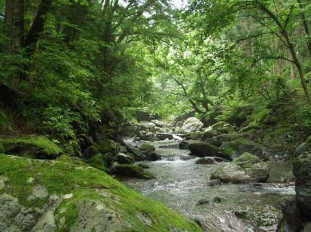 Forest noisawa