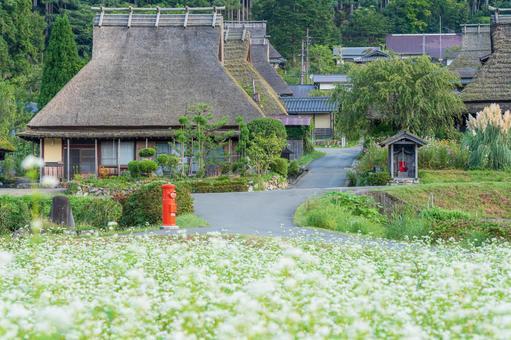 Kyoto Prefecture [Kayabuki no Sato and Soba Flowers]
