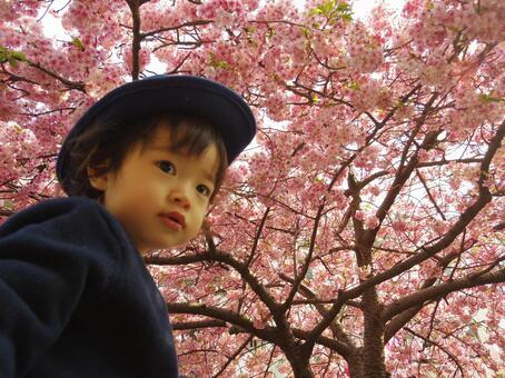 벚꽃과 어린이 4