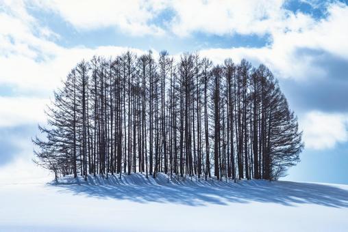 겨울 마일드 세븐 나무