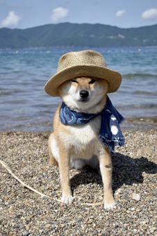 Shiba Inu, Ocean, Straw Hat