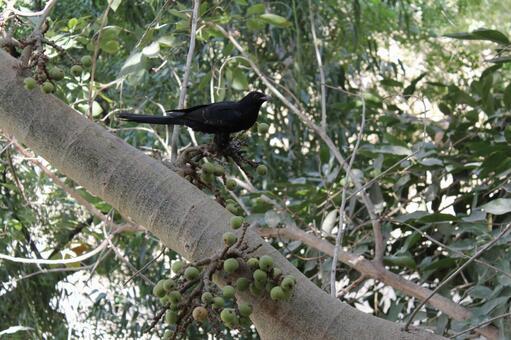 Pakistan Bird 15