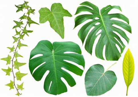 Leaf set * See below for cutout path