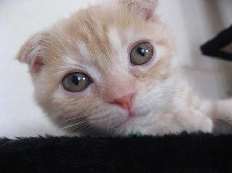 Kitten's round eyes