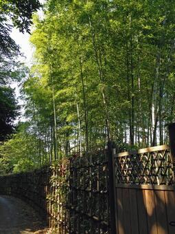 Japanese garden where bamboo grows
