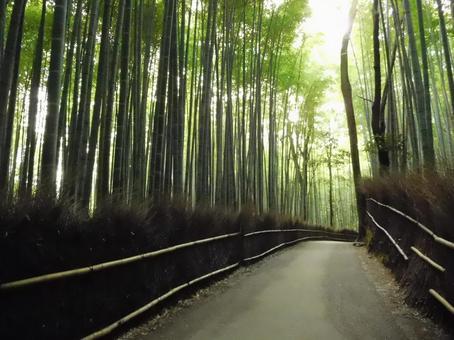 京都嵐山(小徑的竹林)