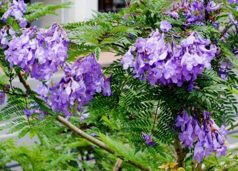 텍스처 꽃 능소화 acbeautify