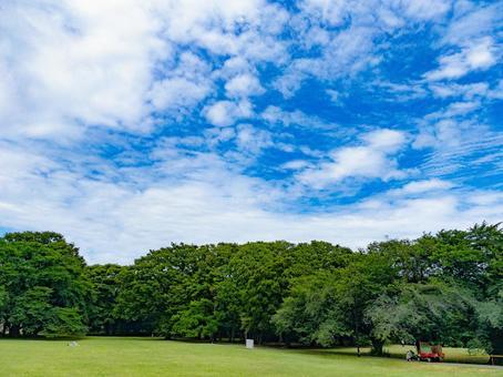 Park under the blue sky