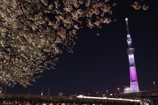 Sakura and Sky Tree and Tobu Line