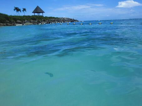 Cebu Island A