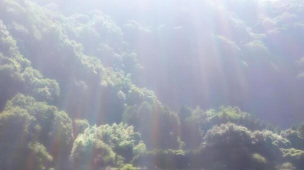 Countryside forest and sunlight 01