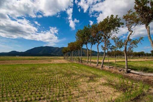 稲刈り後の夏井の風景