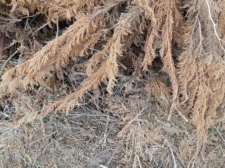 낙엽 침엽수 텍스처
