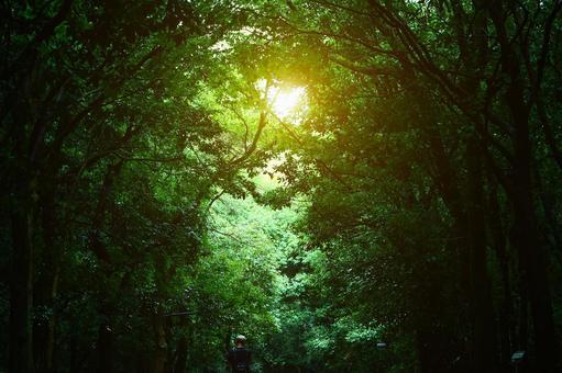 Miraculous Light 2