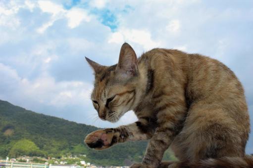 털 고르기하는 고양이