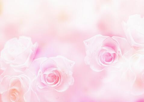 Rose _ Pink background
