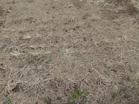 마른 논 잔디 텍스처