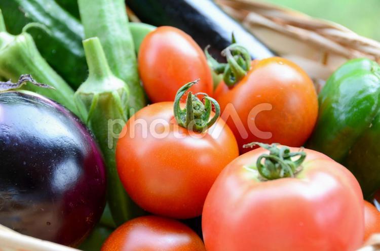夏野菜の写真