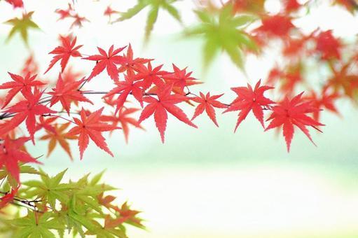 Autumn leaves-109