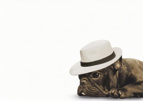 French bulldog and hat
