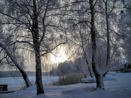 Northern European winter landscape