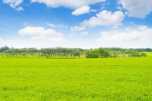 Meadow and blue sky_tree