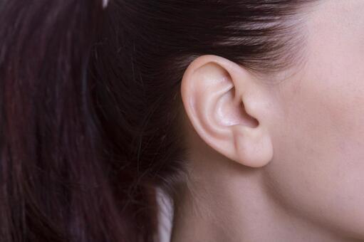 여성 귀와 머리 1
