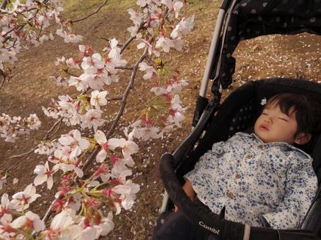 樱花与孩子