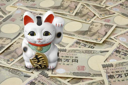 Inviting cat and money