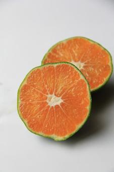 很早的橘子