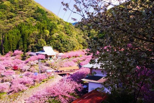 Oita City Fudoson Isshinji Temple