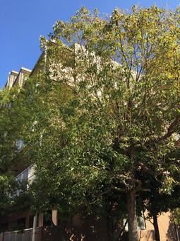 아파트와 나무