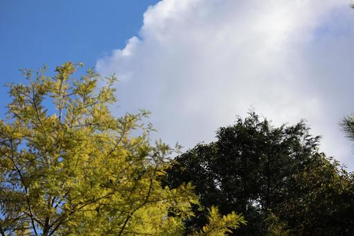 Scenery of Kohoka Nature Park September 2021 (34)