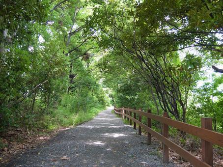 Park walking path 1