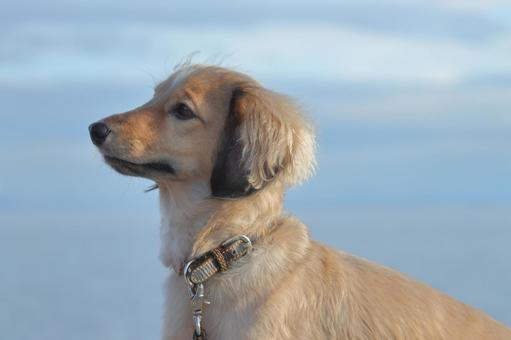 犬のポートレート 横顔 海の背景