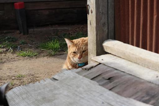 숨기는 도둑 고양이