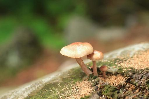 버섯 3 형제