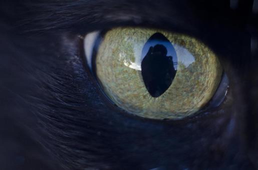 Cats eyes 1