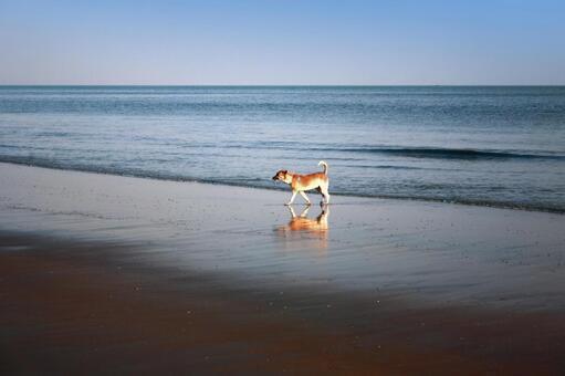 Dog walking on Indian coast